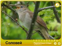 Детская презентация Перелетные птицы.