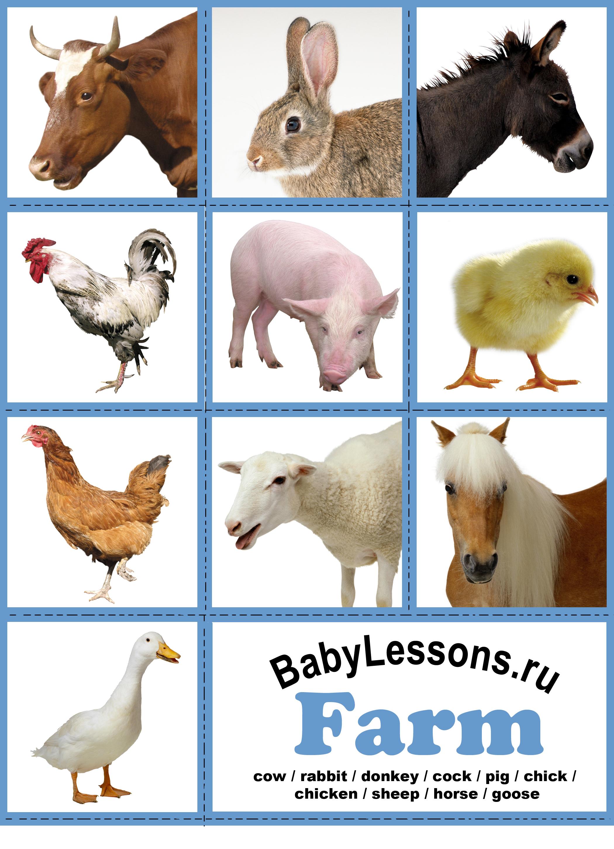 Уроком урок английского языка farm
