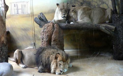 Зоопарк. Отдых с детьми в Чехии