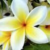 Радость от цветов