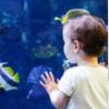 Ухаживаем за аквариумными рыбками